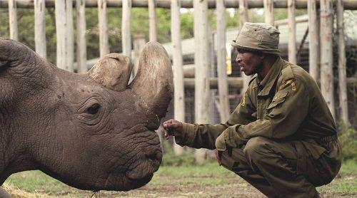 Tê giác trắng đực cuối cùng trên Trái Đất qua đời - Ảnh 1