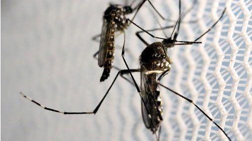 """Trung Quốc sử dụng công nghệ radar quân sự để """"chiến đấu"""" với muỗi - Ảnh 2"""
