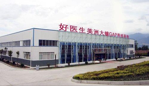 Cận cảnh trang trại khổng lồ nuôi 6 tỷ con gián mỗi năm để làm thuốc ở Trung Quốc - Ảnh 1