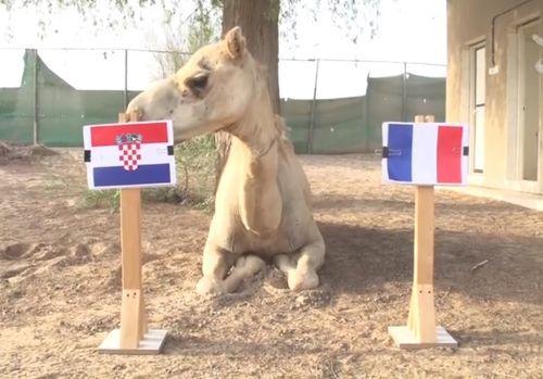 """Dự đoán chung kết World cup 2018 Pháp – Croatia gây sốc của các """"nhà tiên tri"""" - Ảnh 1"""