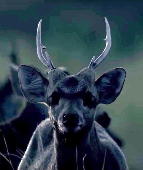 Con trăn dài nhất thế giới nuốt chửng một con hươu để làm bữa ăn cho cả năm - Ảnh 2