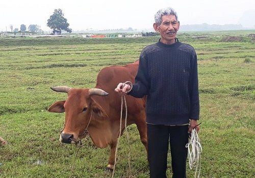 Chỉ có ở Thanh Hóa: Chăn trâu bò phải đóng phí cỏ - Ảnh 1