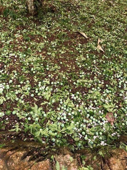 Bắc Kạn lại bị mưa đá tàn phá gây thiệt hại nặng nề - Ảnh 3