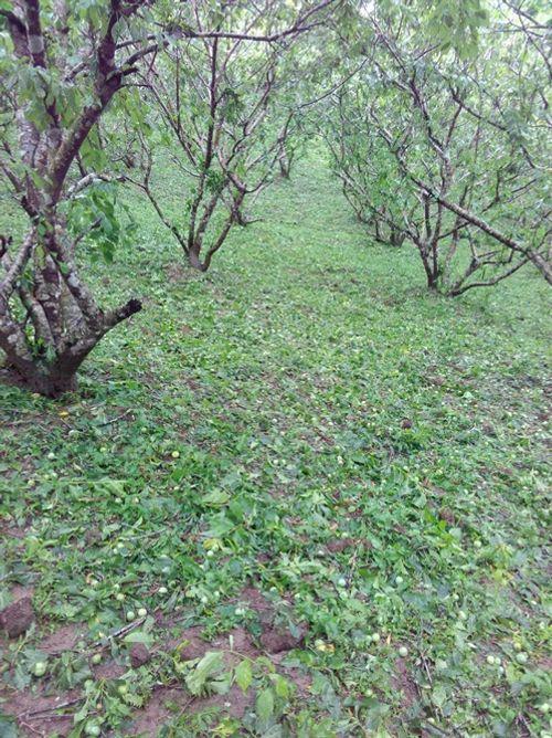Bắc Kạn lại bị mưa đá tàn phá gây thiệt hại nặng nề - Ảnh 2