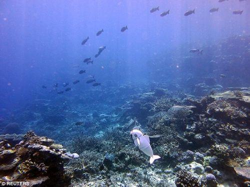 Chú cá robot có thể bơi ở độ sâu 15m mà không bị phát hiện  - Ảnh 3