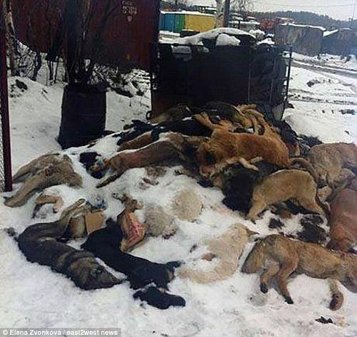 Chiến dịch giết chó hoang trước thềm World Cup 2018 của Nga bị phản đối - Ảnh 2