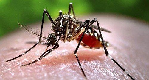 8 căn bệnh dễ mắc vào mùa mưa và cách phòng chống - Ảnh 1