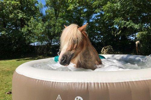 """Spa """"sang chảnh"""" dành cho ngựa: Đắp mặt nạ, tắm nắng, massage như người - Ảnh 1"""
