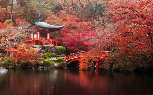 Lý thú ngắm hoa anh đào nghịch mùa ở Obara giữa thu Nhật Bản - Ảnh 1