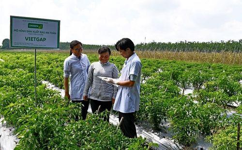 UNIBEN hỗ trợ nông dân thực hiện VietGAP, sản xuất rau an toàn, hướng tới phát triển vùng nguyên liệu sạch - Ảnh 2