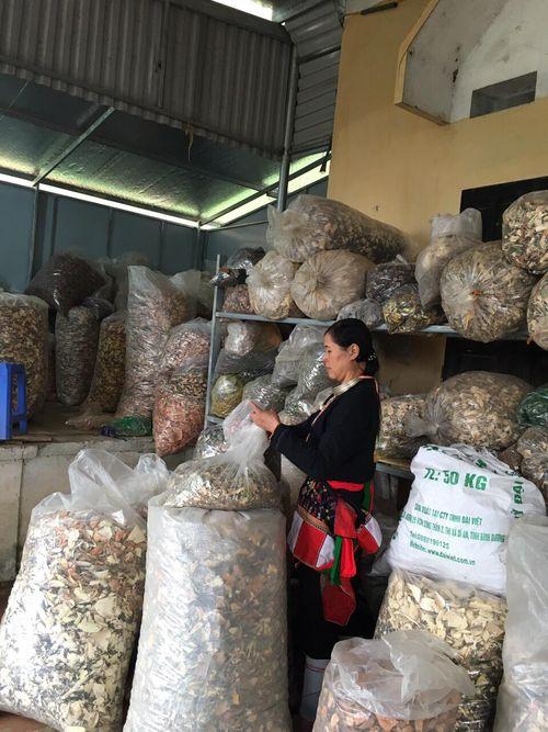 Lương y Triệu Thị Hòa - người  phụ nữ vùng cao mát tay đẩy lùi bệnh đau nhức xương khớp   - Ảnh 1