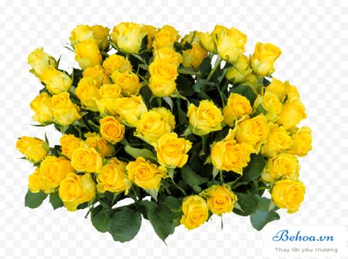 Đại chiến hoa hồng trong tiệm hoa xinh đẹp - Ảnh 3