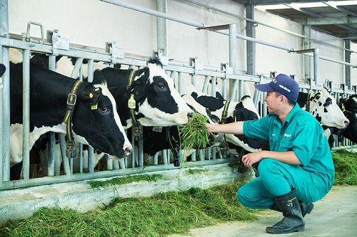 """""""Resort"""" bò sữa Vinamilk Tây Ninh – Ngôi nhà lý tưởng của những """"cô bò"""" hạnh phúc - Ảnh 6"""
