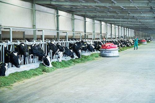 """""""Resort"""" bò sữa Vinamilk Tây Ninh – Ngôi nhà lý tưởng của những """"cô bò"""" hạnh phúc - Ảnh 7"""