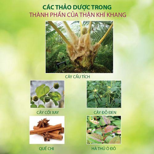 Bí mật về một loại cây quý ở Việt Nam giúp giảm tiểu đêm – Phòng nguy cơ suy thận - Ảnh 3