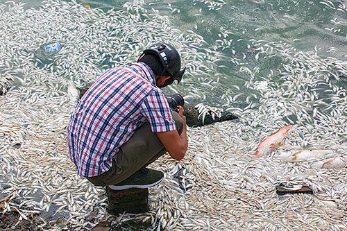 Tình trạng cá chết ở Hồ Tây chưa có dấu hiệu chấm dứt - Ảnh 7