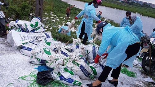 Hải Phòng: Dịch cúm A/H5N6 tái phát, hàng nghìn con gia cầm bỗng nhiên quay tròn rồi chết - Ảnh 1