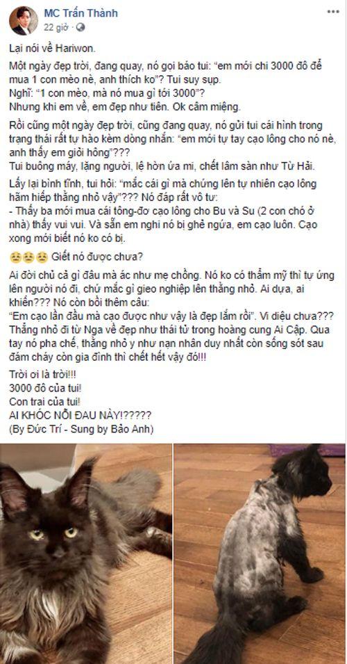 Trấn Thành kêu trời vì Hari Won cạo sạch lông mèo cưng 3.000 USD - Ảnh 2