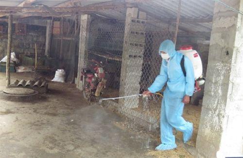 Ăn phải thịt lợn mắc dịch tả châu Phi nguy hiểm như thế nào? - Ảnh 1