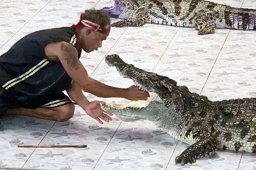 Khán giả sốc nặng khi chứng kiến cảnh cá sấu cắn huấn luyện viên - Ảnh 1
