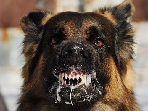 Tin tức đời sống mới nhất ngày 27/3/2019: Chó dại cắn 4 người rồi lăn ra chết - Ảnh 1