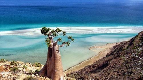 """Bí mật hòn đảo """"ngoài hành tinh"""" Socotra và loài cây """"chảy máu"""" - Ảnh 1"""