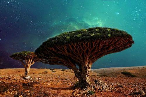 """Bí mật hòn đảo """"ngoài hành tinh"""" Socotra và loài cây """"chảy máu"""" - Ảnh 3"""