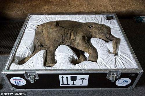 """""""Công viên kỷ Jura"""" sắp ra mắt tại Nga với sự """"hồi sinh"""" của voi ma mút - Ảnh 2"""