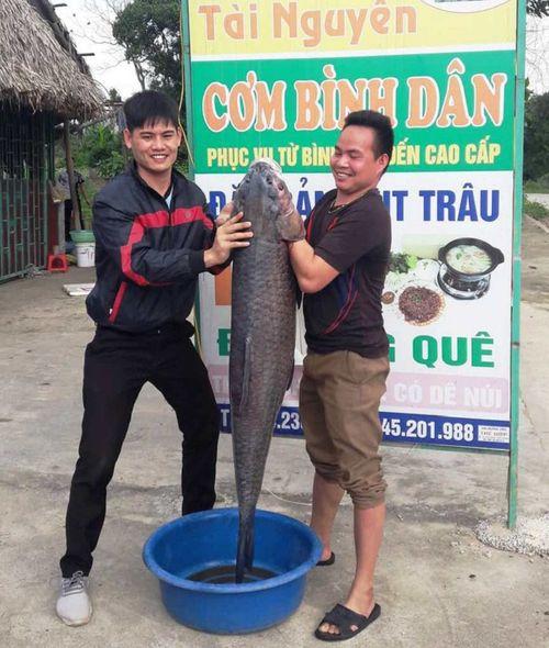 """Cận cảnh con cá trắm đen """"khủng"""" dài gần 1 mét, nặng hơn 33 cân sa lướt ngư dân  - Ảnh 2"""