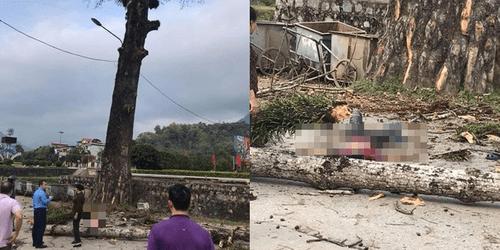 Hà Giang: Nam thanh niên tử vong do cành cây gạo rơi trúng đầu - Ảnh 1