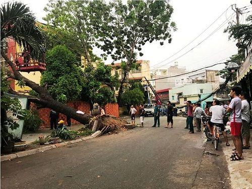 Gió lốc mạnh quét qua Sài Gòn, hàng loạt cây to gãy đổ - Ảnh 1