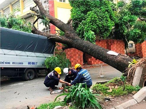 Gió lốc mạnh quét qua Sài Gòn, hàng loạt cây to gãy đổ - Ảnh 2
