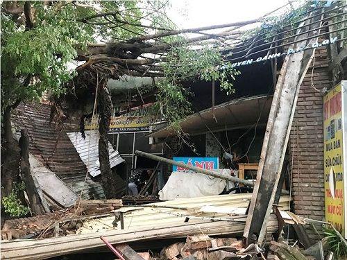 Gió lốc mạnh quét qua Sài Gòn, hàng loạt cây to gãy đổ - Ảnh 6