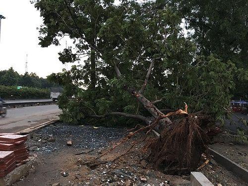 Gió lốc mạnh quét qua Sài Gòn, hàng loạt cây to gãy đổ - Ảnh 7