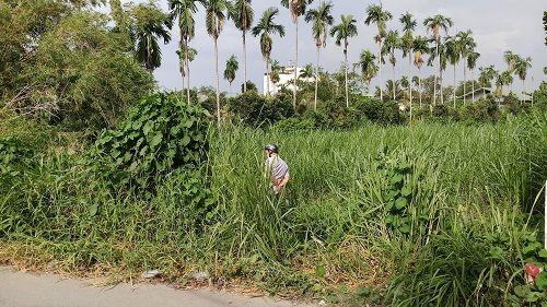 TP.HCM: Phát hiện thi thể người đàn ông đang phân hủy trong bãi cỏ - Ảnh 1