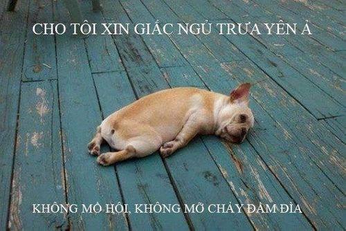 Cười rớt nước mắt với loạt ảnh chế nắng nóng ở Hà Nội của cư dân mạng - Ảnh 12