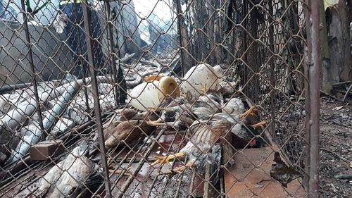 Hiện trường vụ hỏa hoạn kinh hoàng tại xưởng sơn Hà Nội - Ảnh 6
