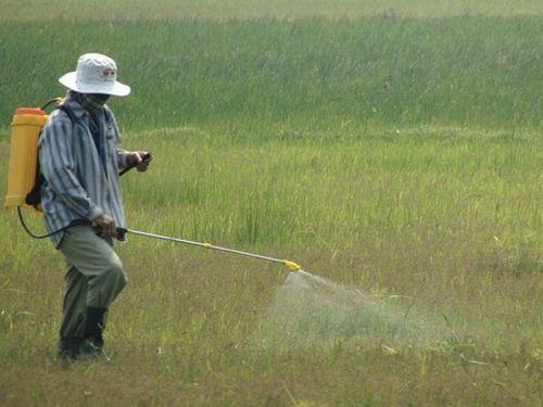 Thuốc diệt cỏ sử dụng tràn lan, nhiều bệnh tật phát sinh khó lường - Ảnh 1