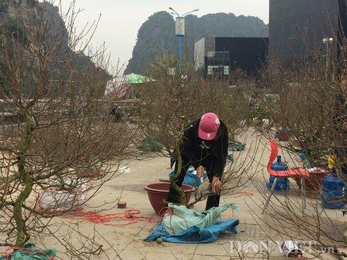 Chiều 29 Tết, người dân tự tay chặt phá đào, quất vì bị ép giá quá rẻ - Ảnh 3