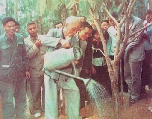 Chuyện cảm động ít biết về Bác Hồ khởi xướng Tết Trồng cây 60 năm về trước - Ảnh 1