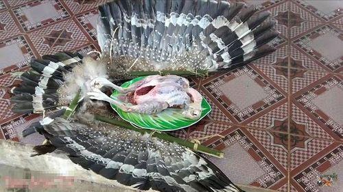 """Vụ 2 anh em Tam Mao nghi làm thịt chim """"quý"""": Vẫn chưa xác định được loài chim """"lạ"""" - Ảnh 2"""