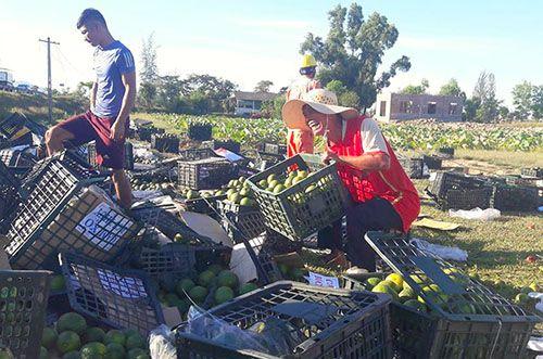 Lật xe container chở hơn 20 tấn hoa quả, dân đội nắng gom giúp tài xế - Ảnh 2