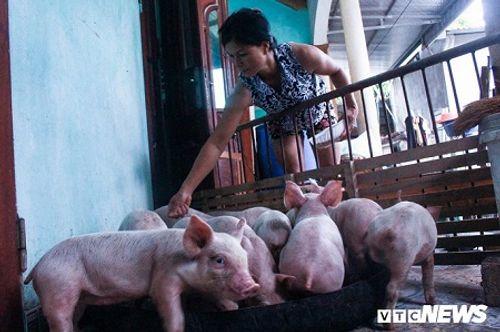 Chùm ảnh: Nước ngập đến cổ, người dân Thủ đô đưa lợn, gà lên nhà ăn ngủ cùng chủ - Ảnh 10