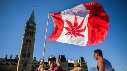 Canada trở thành quốc gia thứ 2 trên thế giới hợp pháp hóa cần sa - Ảnh 1