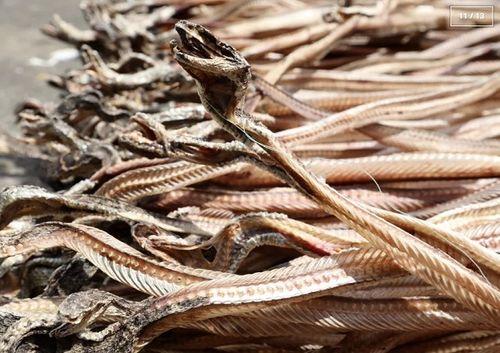 Rùng mình với ngôi làng nuôi hàng nghìn đàn rắn trong suốt 40 năm - Ảnh 11