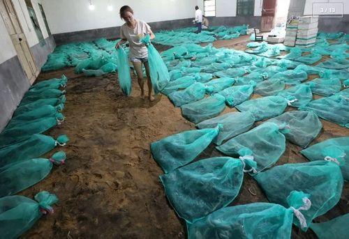 Rùng mình với ngôi làng nuôi hàng nghìn đàn rắn trong suốt 40 năm - Ảnh 3