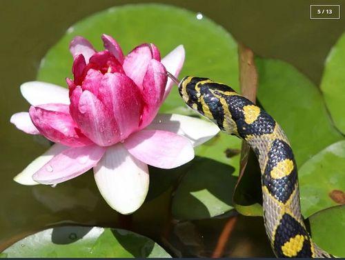 Rùng mình với ngôi làng nuôi hàng nghìn đàn rắn trong suốt 40 năm - Ảnh 5