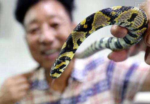 Rùng mình với ngôi làng nuôi hàng nghìn đàn rắn trong suốt 40 năm - Ảnh 8
