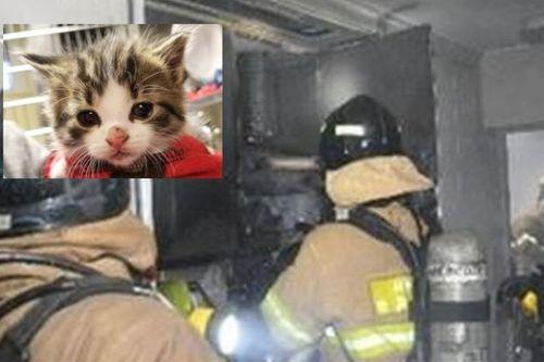 """Chân dung """"siêu mèo phóng hỏa"""" đốt căn hộ, khiến 22 người phải sơ tán  - Ảnh 1"""