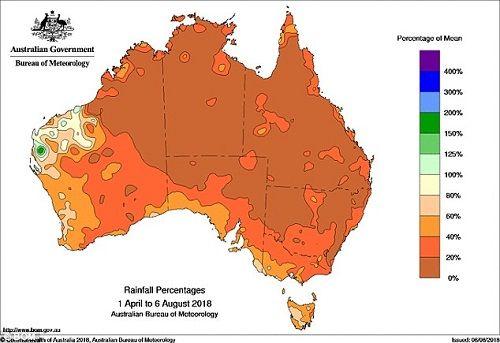 Hạn hán nghiêm trọng nhất 100 năm qua ở Úc, kangaroo chết trơ xương giữa đồng - Ảnh 2